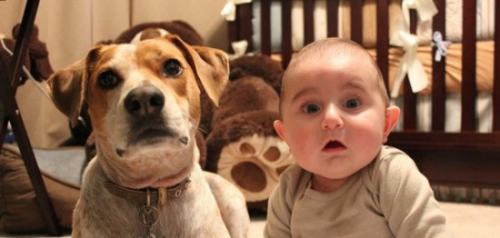 26-Dogs-That-Look-Like-Their-Owners-004-550x262