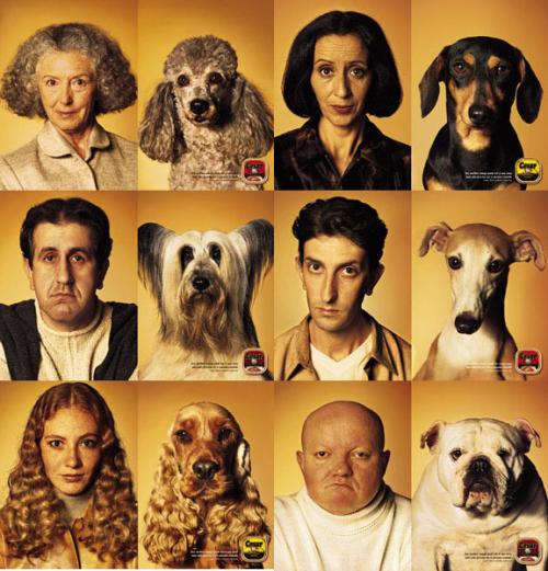 Dogsownerslook-likedogs